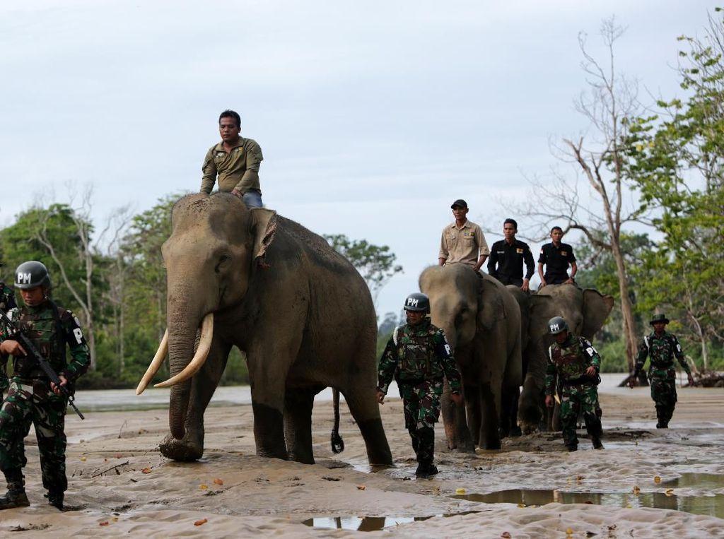 Ketika Gajah Ikut Patroli Hutan di Aceh