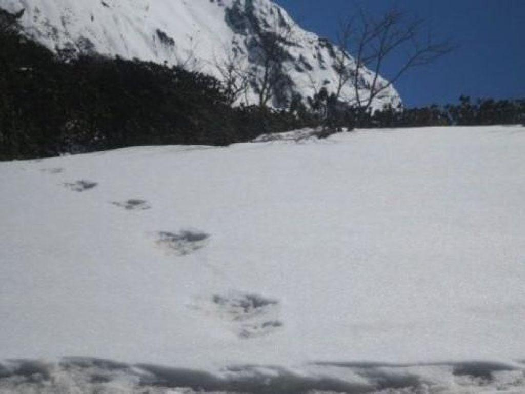 Jejak Kaki Makhluk Salju Yeti Ditemukan di Himalaya