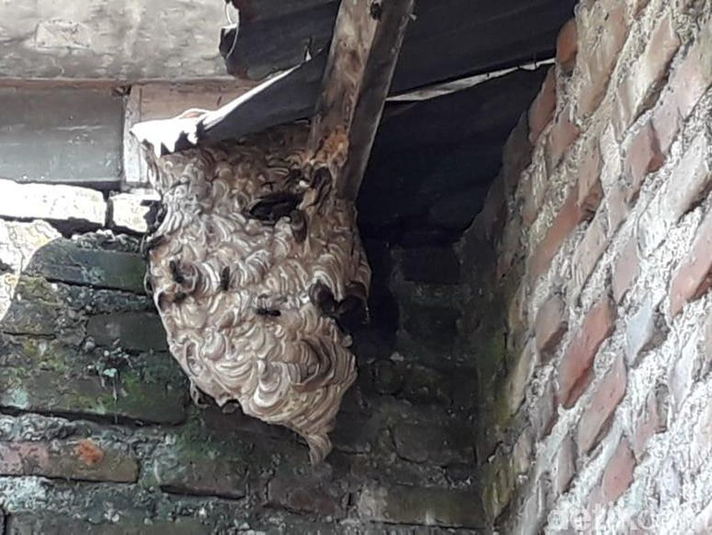 Kawanan Lebah di Kediri Ngamuk, 5 Bocah SD Jadi Korban