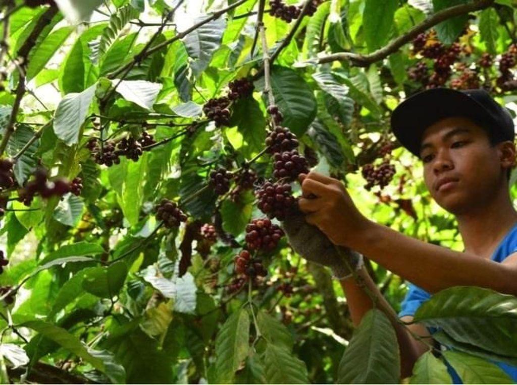 Solusi Bisnis Unggul BCA Dukung Pertumbuhan Ekonomi Masyarakat