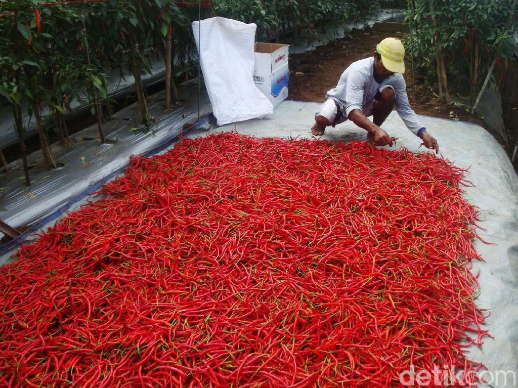 Jelang Lebaran, Harga Cabai Merah Naik Jadi Rp 30.000/Kg