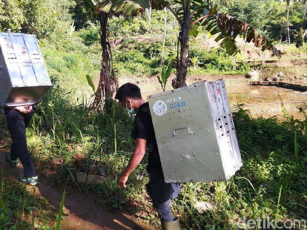 Tempuh Hutan Menanjak, IAR Lepas 15 Kukang Jawa di Gunung Sawal