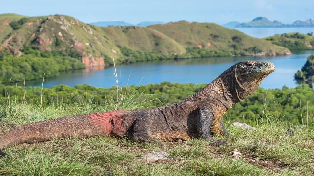 Potret 7 Pulau Dengan Nama Hewan di Indonesia