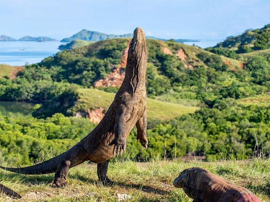7 Pulau Bernama Hewan di Indonesia