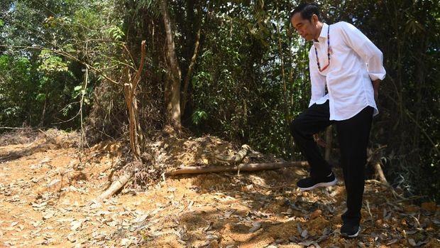 Presiden Jokowi saat meninjau salah satu lokasi calon ibu kota negara di Gunung Mas, Kalimantan Tengah, Rabu (8/5).