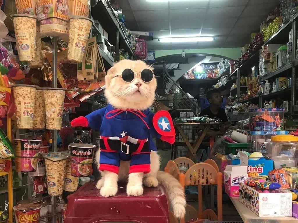 Lucunya Kucing Berkostum Avengers yang Pintar Jualan Daging hingga Sayuran