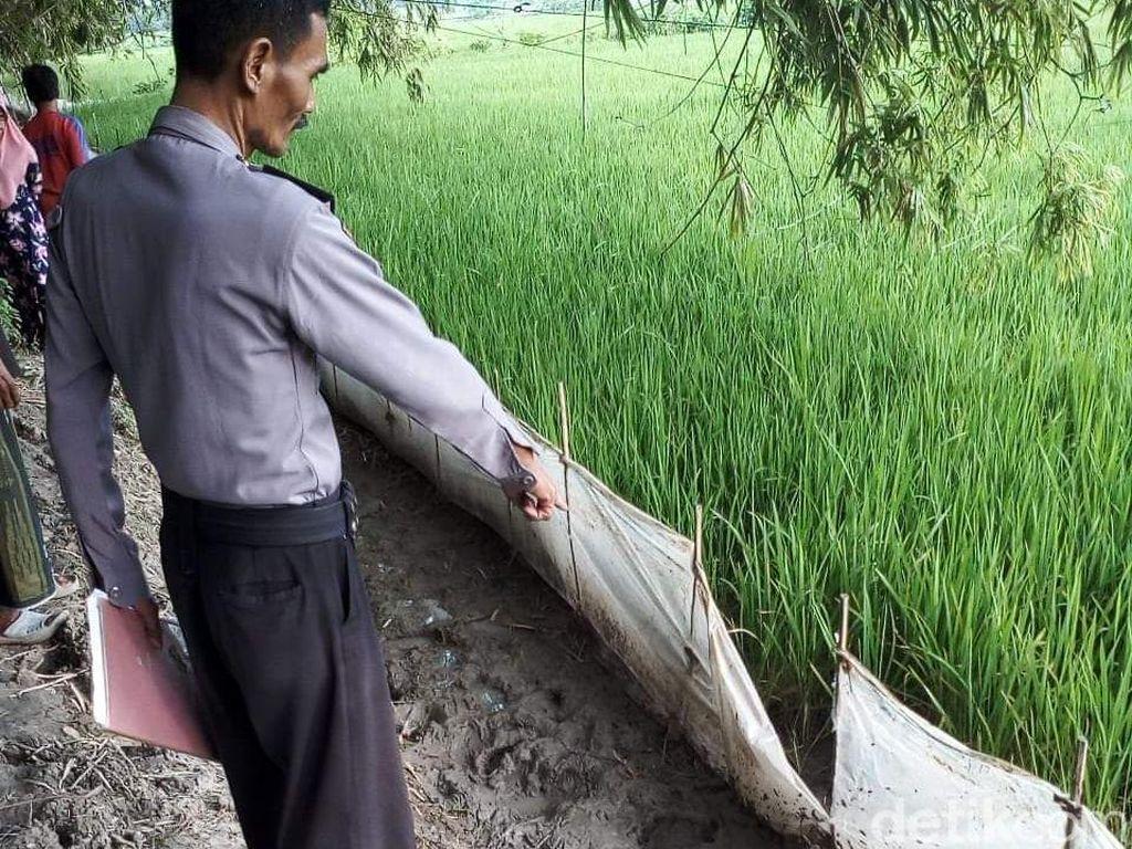 Jebakan Tikus Makan Korban, Seorang Petani Tewas Tersetrum