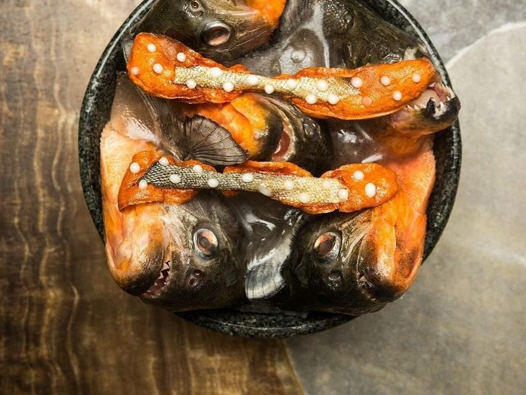 Bawa Puluhan Ikan Piranha Amazon, Chef Ini Diinterogasi Petugas Bandara