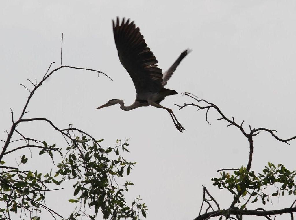 Momen Pengamatan Migrasi Burung di Angke