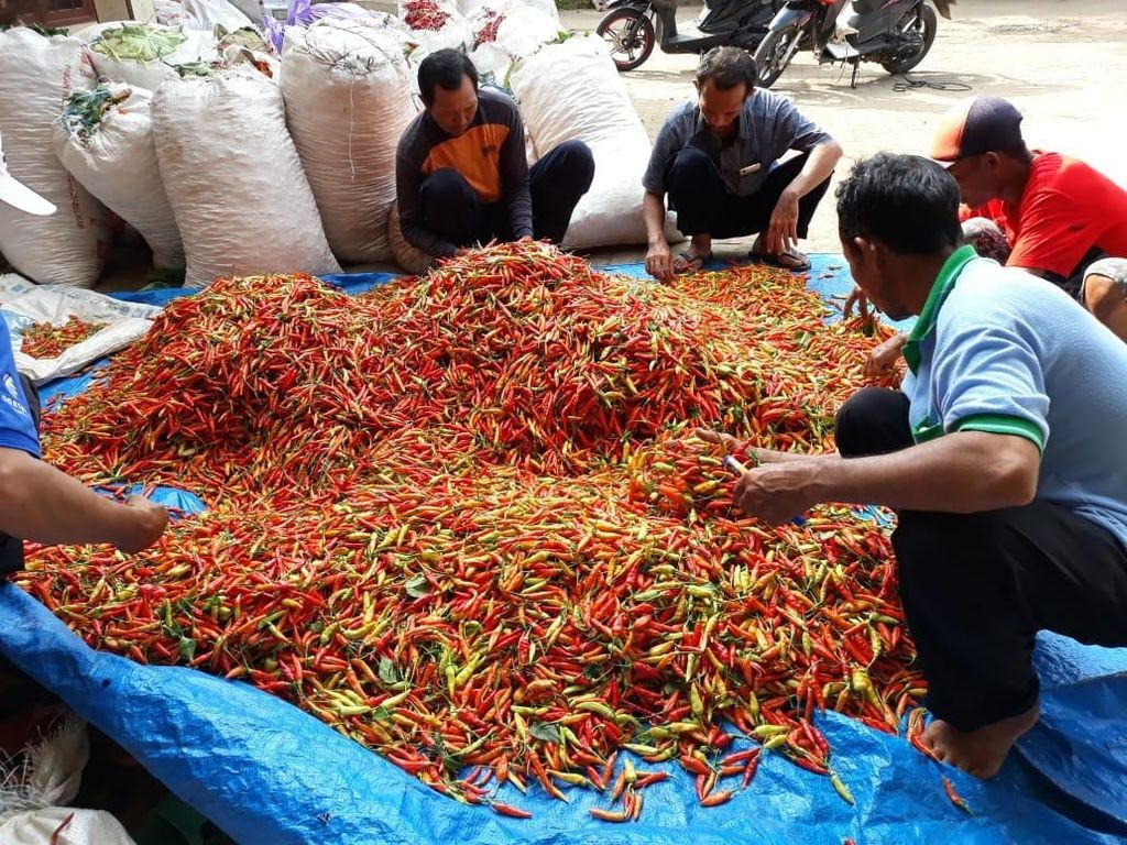 Sumbang Inflasi di Ramadhan, Harga Cabai Kini Kembali Normal
