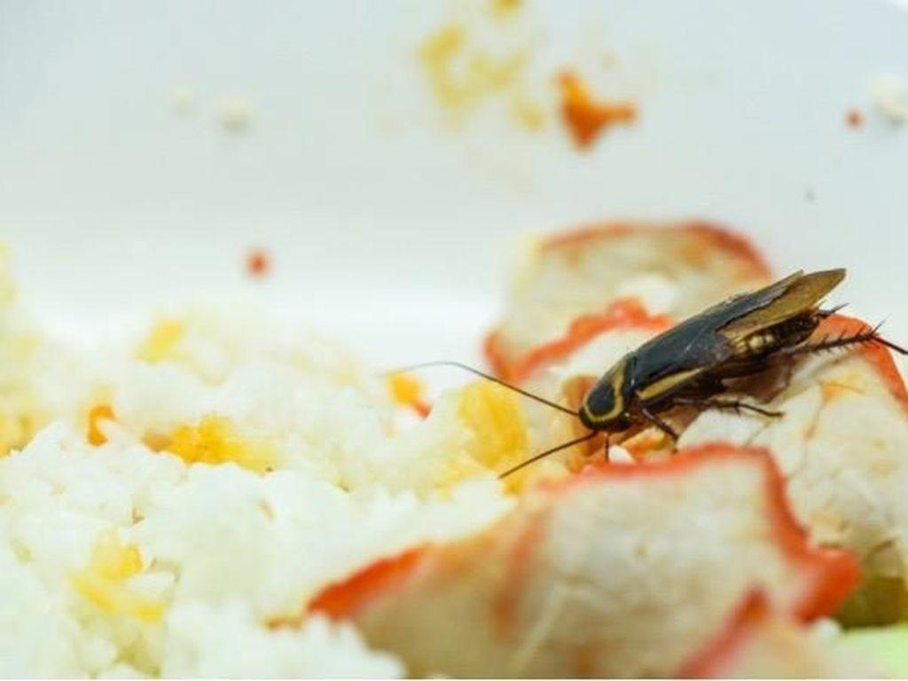 Pentingnya Melindungi Makanan Saat Puasa dari Kecoa