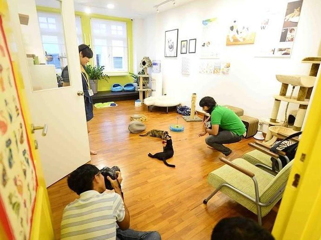 Meong! Ternyata Singapura Punya Museum Kucing