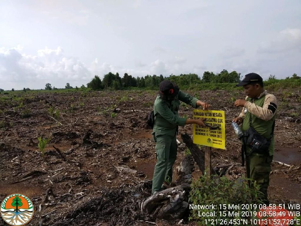 BBKSDA Riau Musnahkan Kebun Sawit di Taman Nasional Zamrud