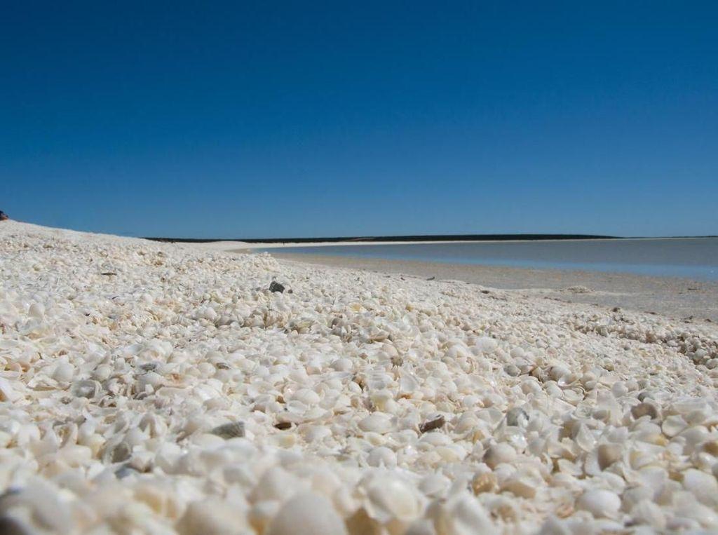 Bukan Pasir Putih, Pantai Ini Ditutupi Cangkang Kerang!