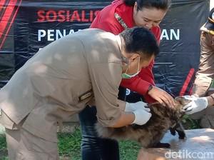 KLB Rabies di Sumbawa: 149 Orang Digigit Anjing, 19 di Antaranya Kena Rabies