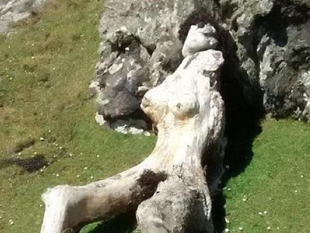 Mirip Wanita Telanjang, Batang Kayu Ini Curi Perhatian Turis