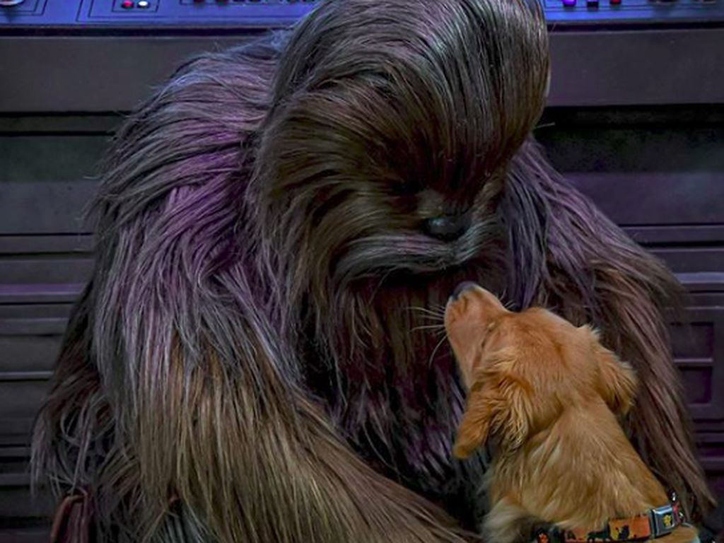 Foto Viral Anjing Pemandu Bertemu Chewbacca Star Wars
