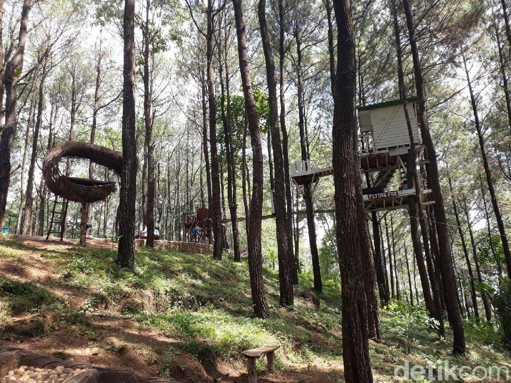4 Hutan Pinus di Bantul yang Mirip Lokasi Film Tilik