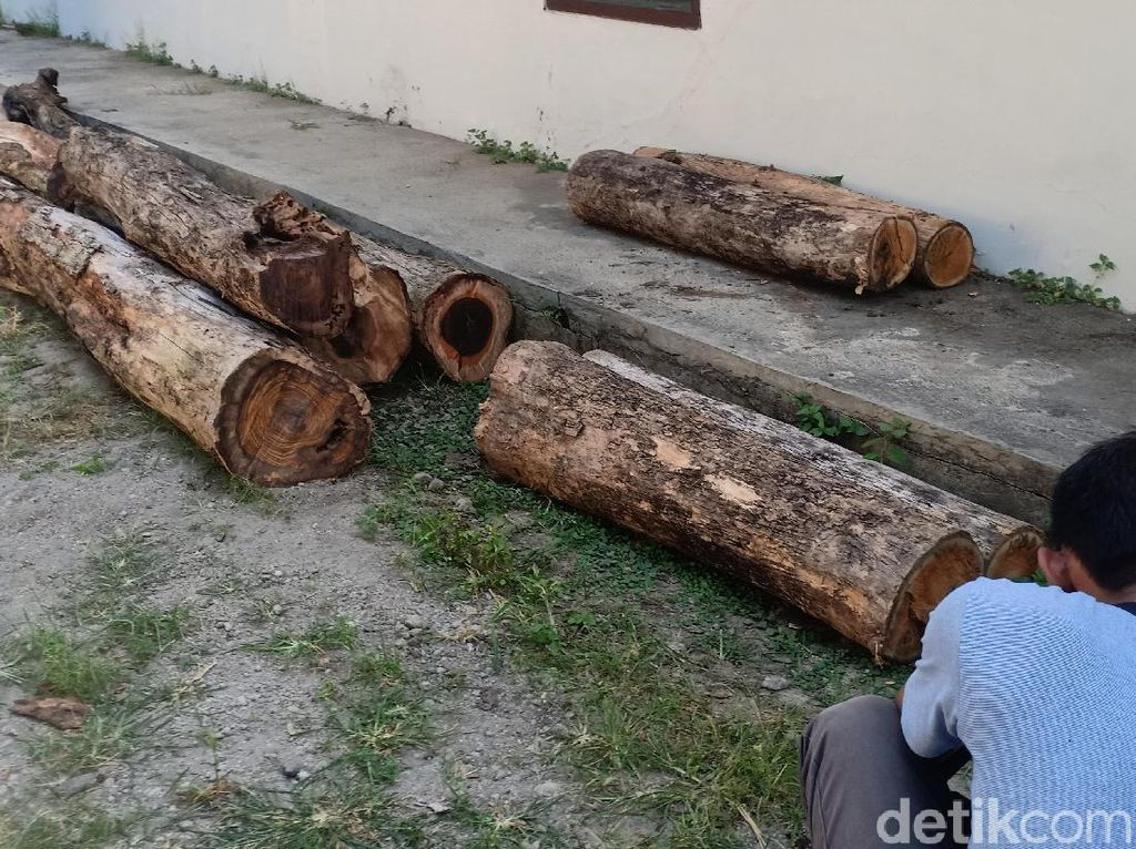 Polisi Hutan Madiun Amankan Tiga Pembalak Kayu Sonokeling
