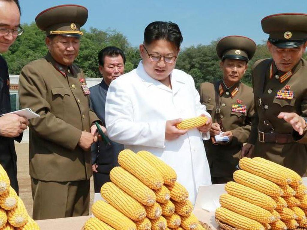 Hak Asasi Dipertaruhkan Agar Tidak Kelaparan di Korea Utara