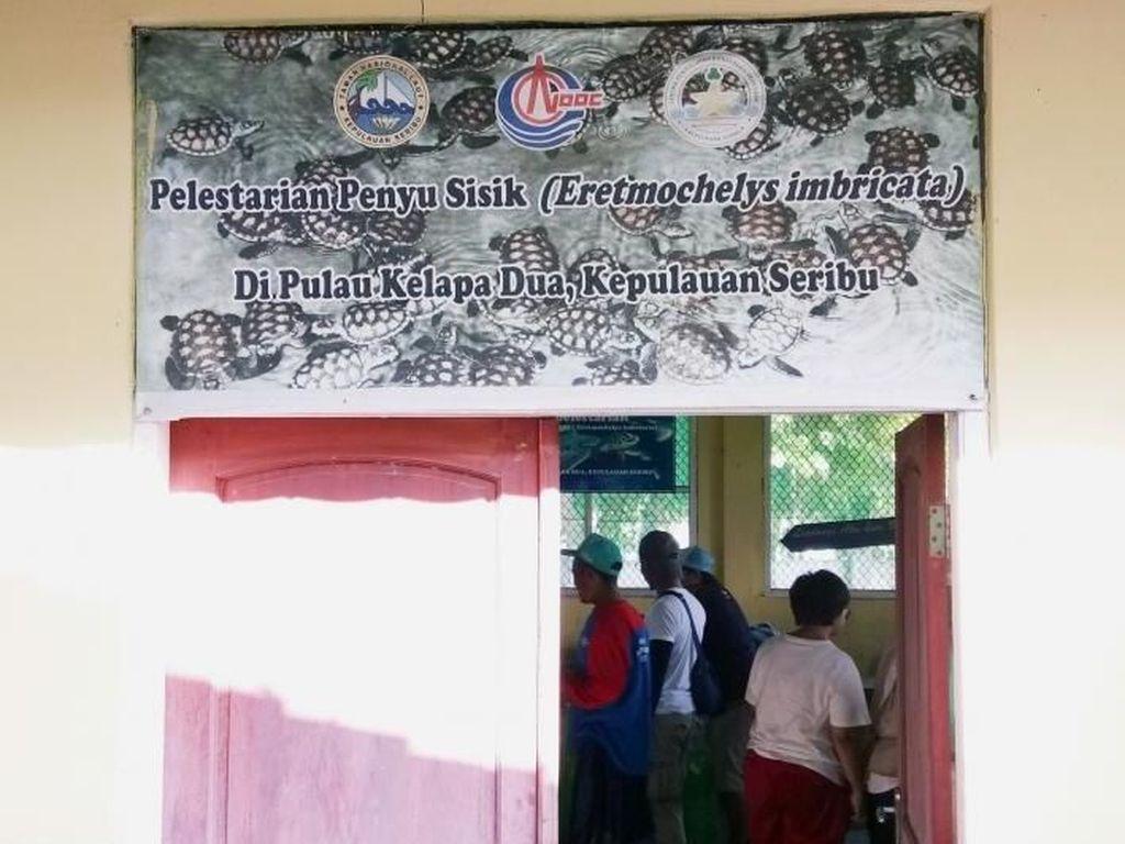 Libur Lebaran di Jakarta: Main Bareng Penyu di Kepulauan Seribu