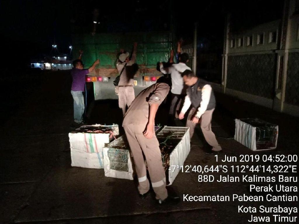 Penyelundupan 700 Ekor Burung dari Makassar ke Surabaya Digagalkan