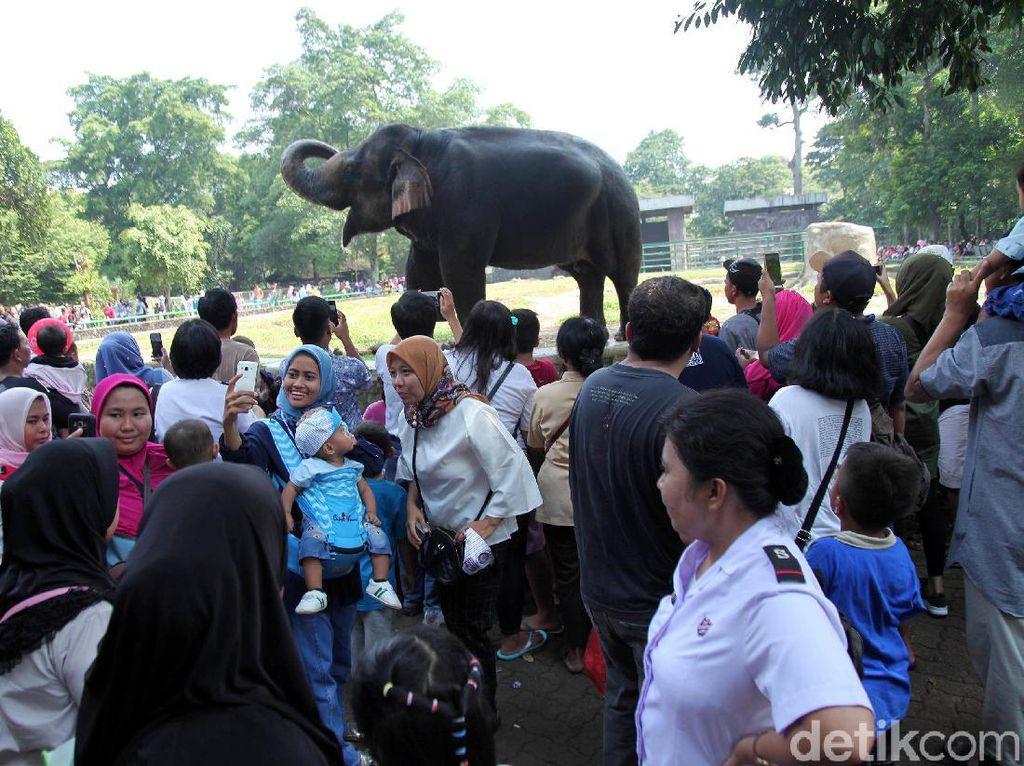 Pengunjung Padati Ragunan