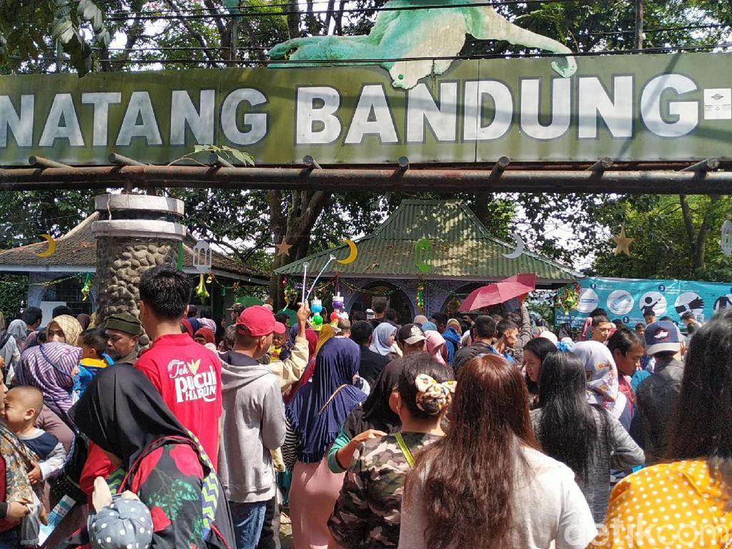 Kebun Binatang Bandung Buka Besok, Terapkan Sistem Buka Tutup