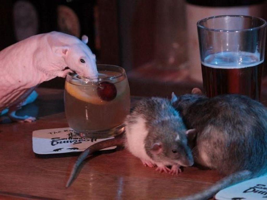 Bayar Rp 700 Ribu Kamu Bisa Main dan Minum dengan Tikus di Kafe Ini