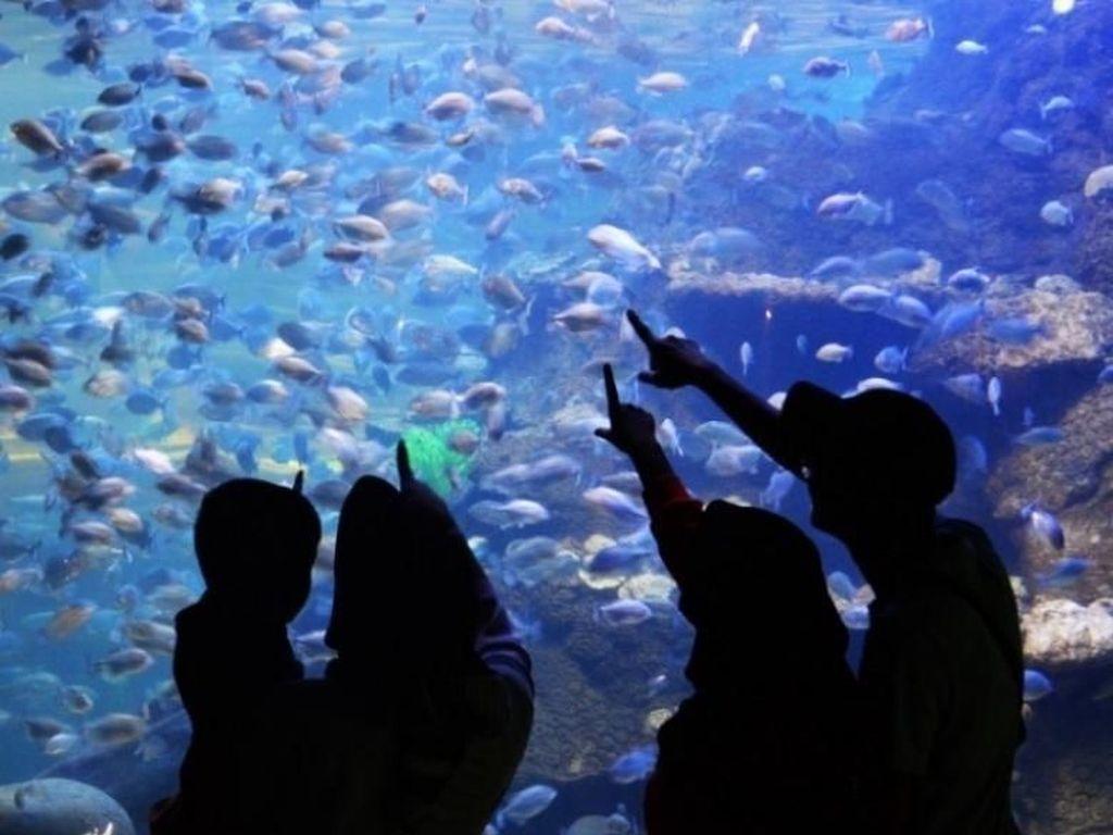 Jangan Kaget, Ancol Jadi Marine Themepark Terbesar se-Asia Tenggara