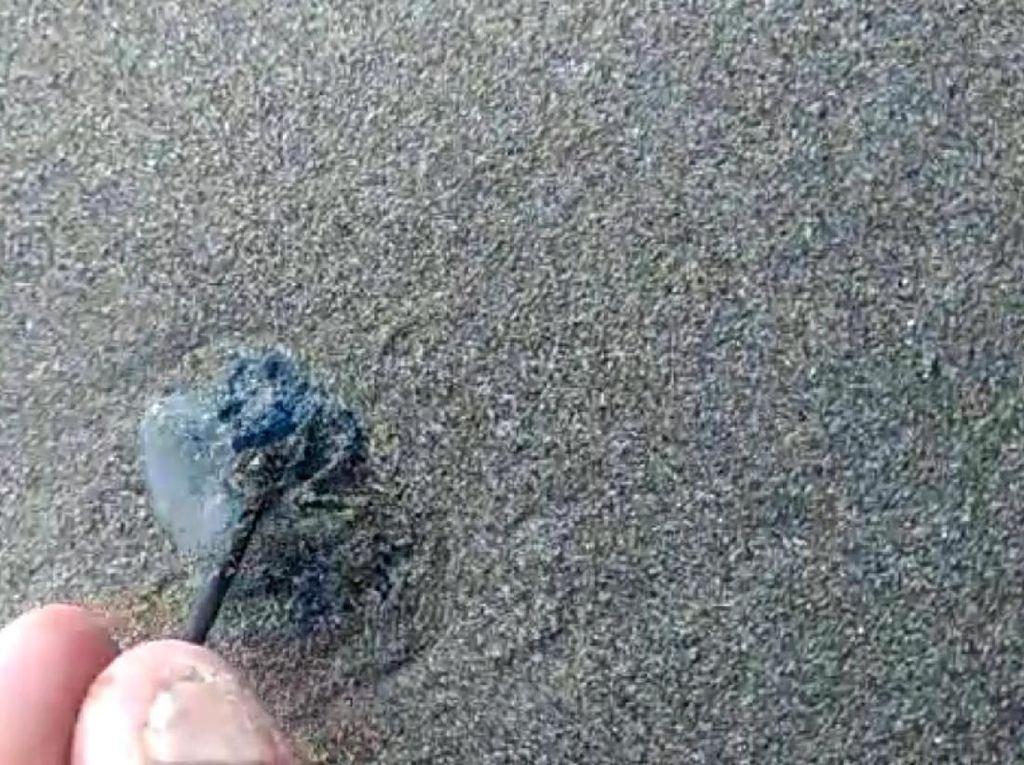 11 Pengunjung Pantai di Sukabumi Tersengat Ubur-ubur