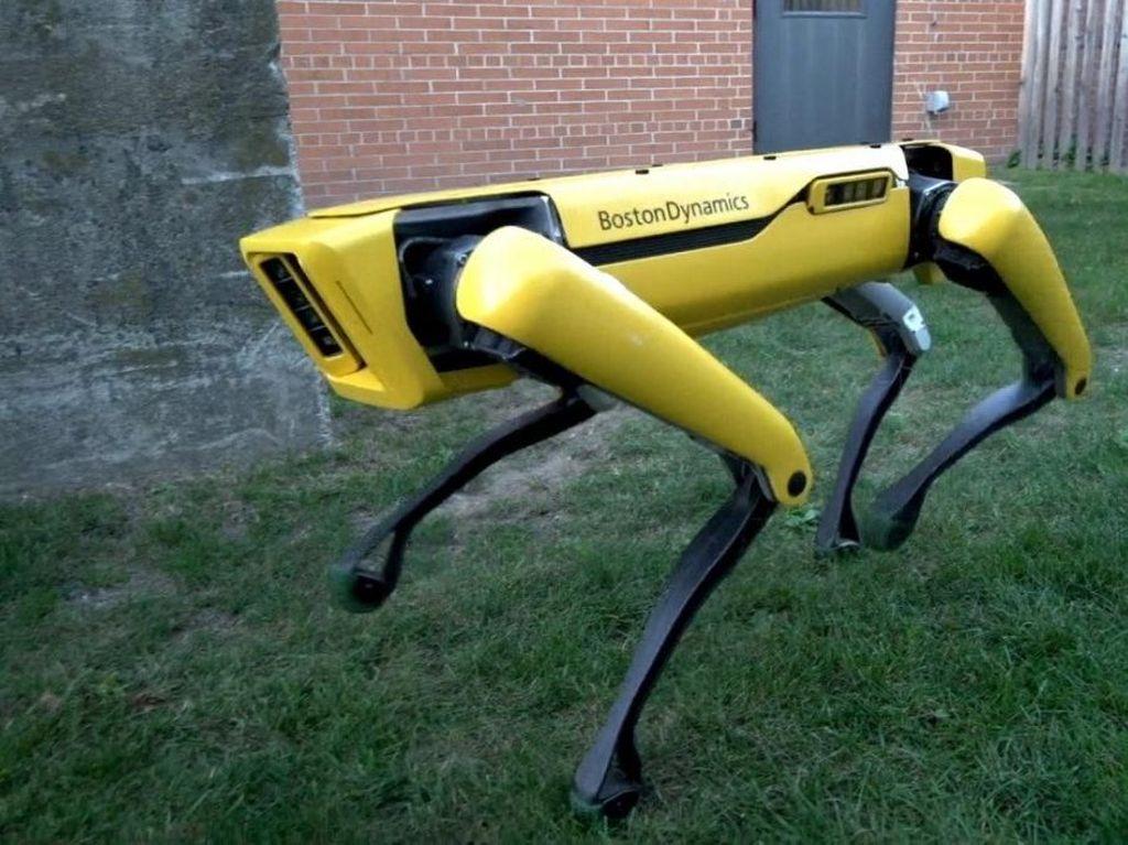 Heboh! Ada Robot Anjing Berjalan-jalan di Pantai Florida