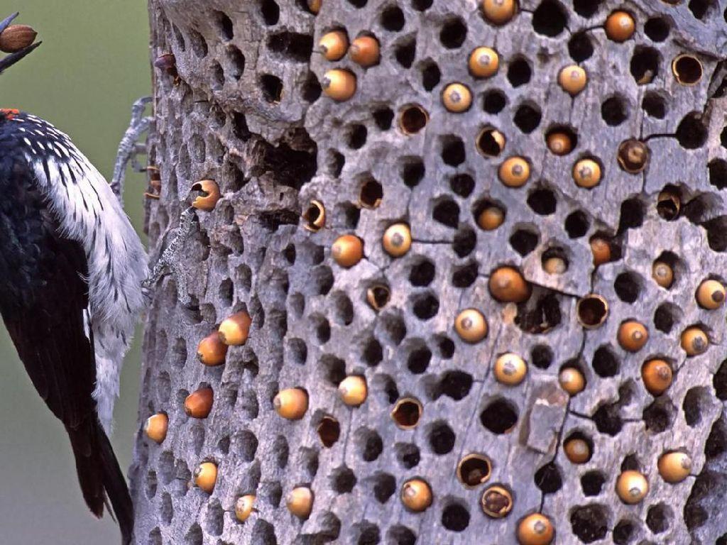 Foto Burung Pelatuk Ini Bikin Banyak Netizen Bergidik
