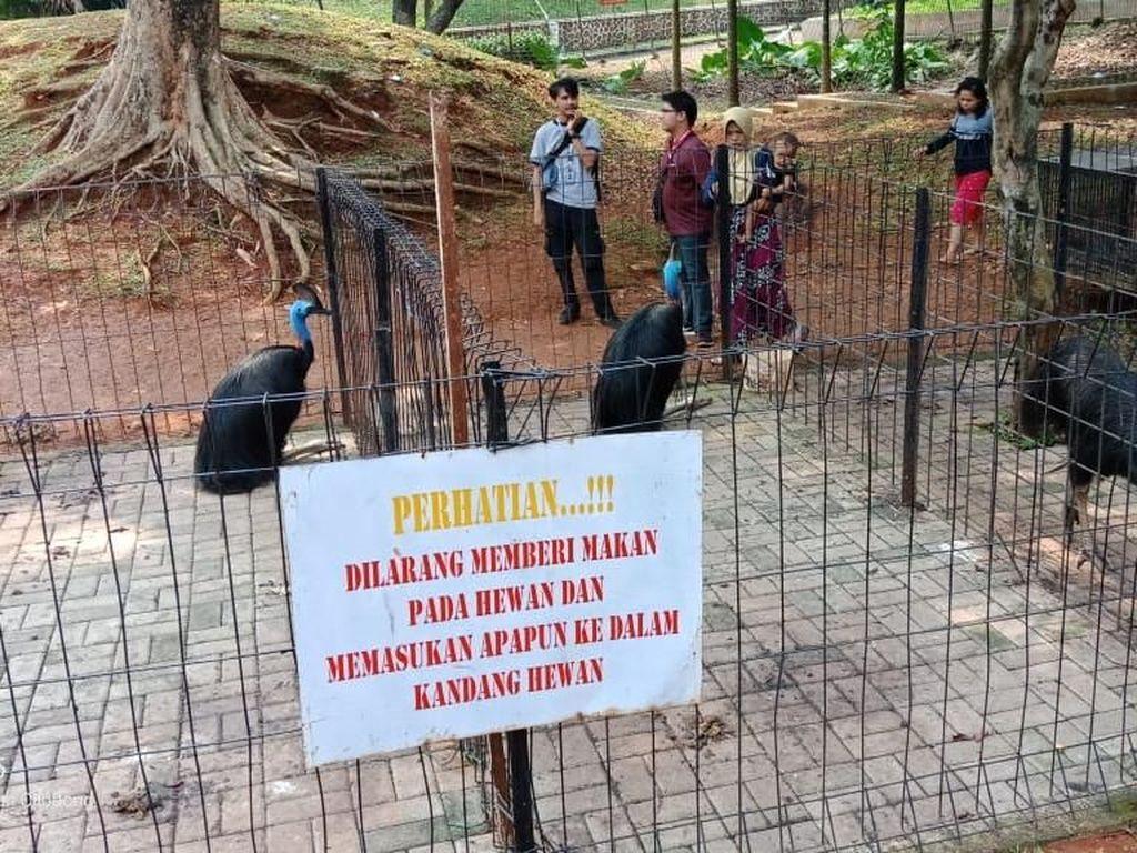 Viral Mini Zoo di Cilodong Depok Kotor, Kostrad Beri Penjelasan