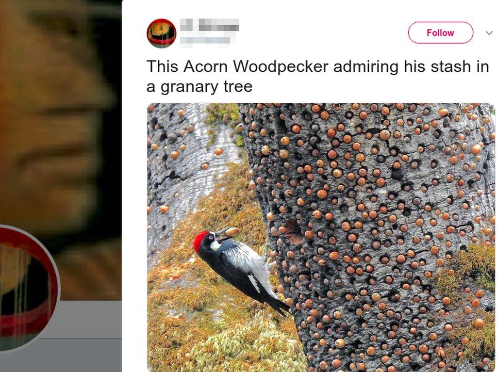 Foto Burung Ini Viral, Kenapa Bikin Banyak Netizen Kesal?