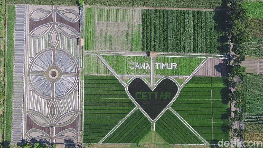 Foto: Crop Circle Viral dari Kediri