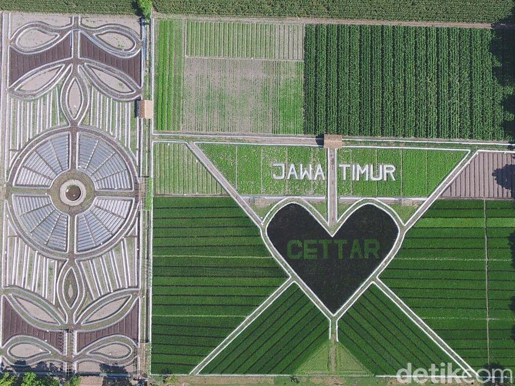 Melihat Lebih Dekat Fenomena Crop Circle yang Viral di Kediri