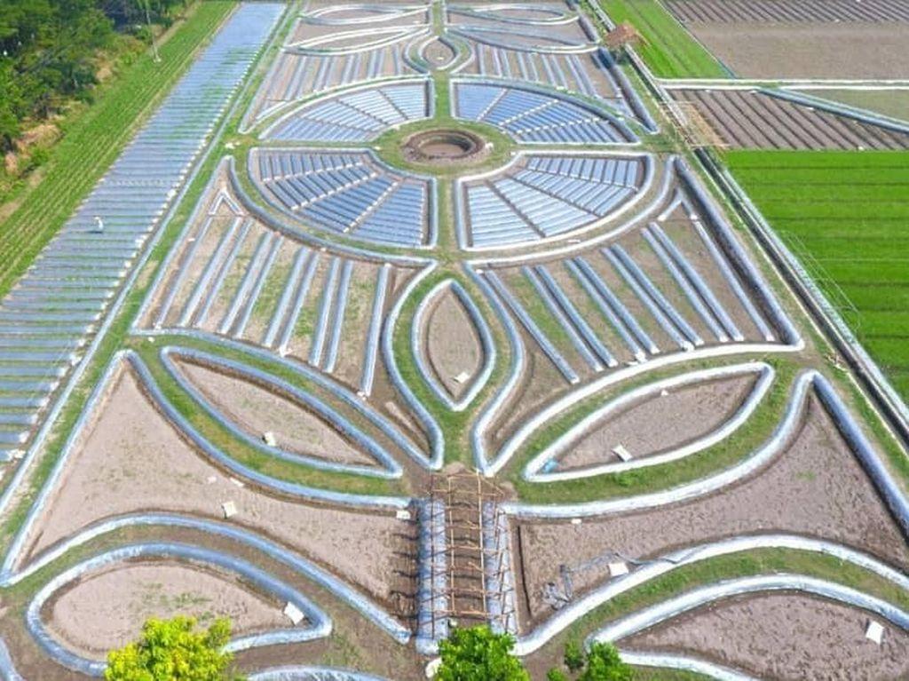 Khofifah Promosi Wisata Crop Circle di Kediri