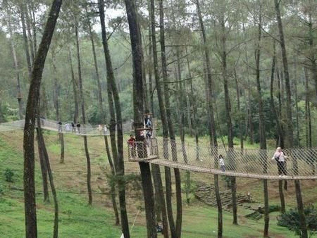 Yang Segar di Bandung, Ada Orchid Forest Cikole
