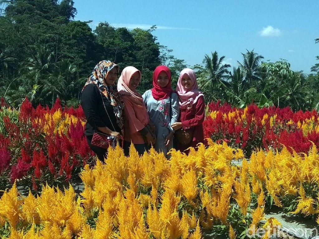 Foto: Taman Bunga Instagramable dari Magelang