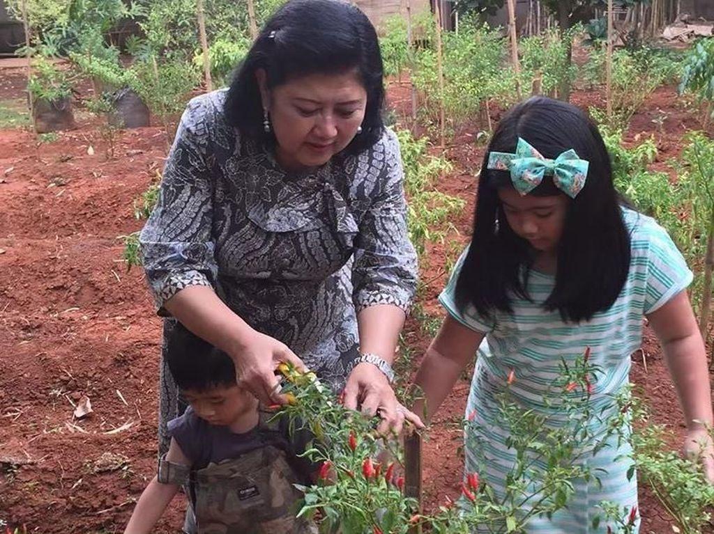 8 Foto Ini Buktikan Mendiang Ani Yudhoyono Senang Berkebun Sayuran dan Buah