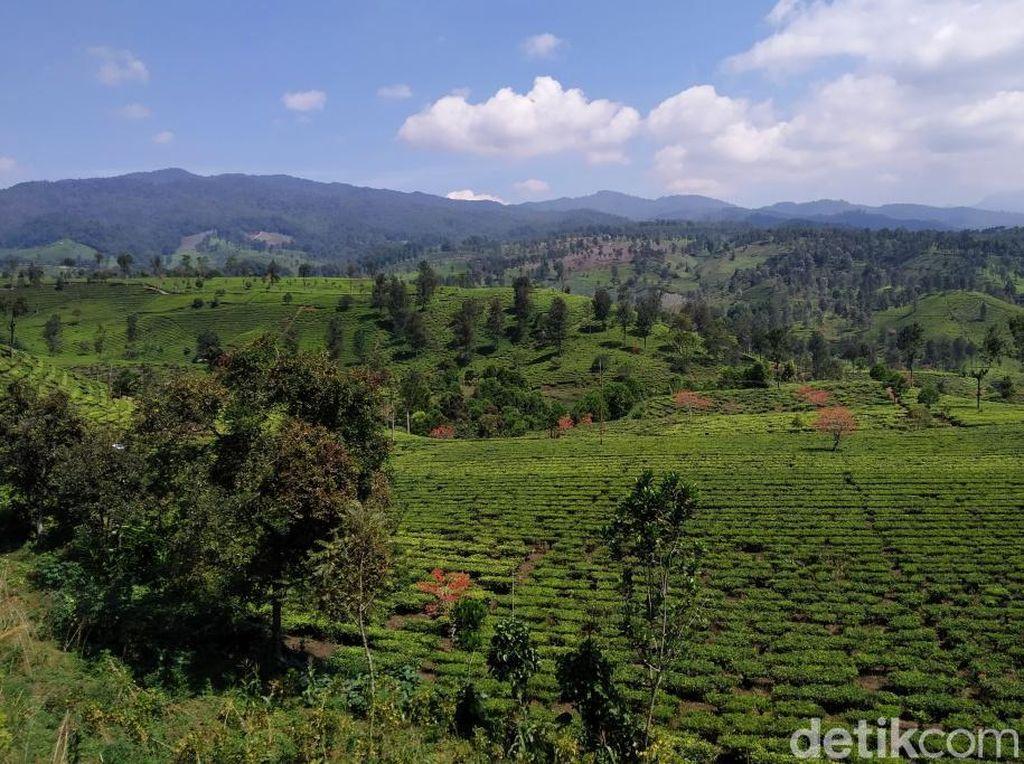 Foto: Pemandangan Cantik dari Bandung Selatan