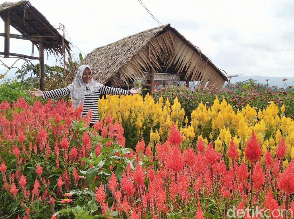 Foto: Kampoeng Sawah yang Instagramable di Ciamis