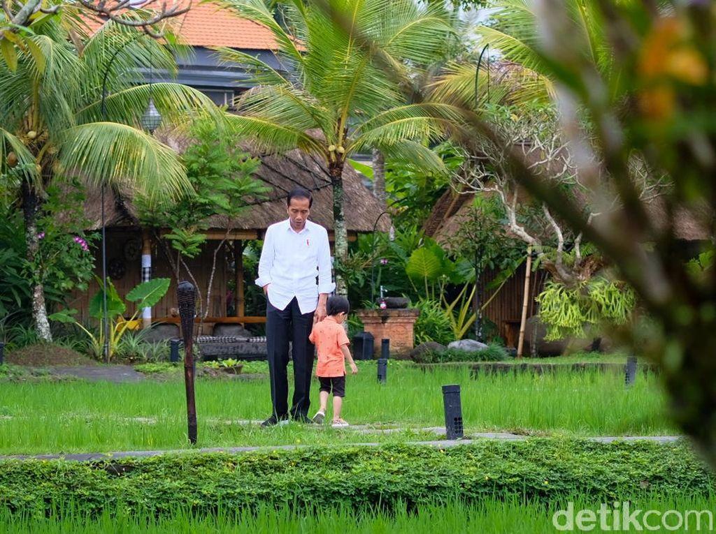 Makan Siang di Ubud, Jokowi Temani Jan Ethes Main di Tepi Sawah