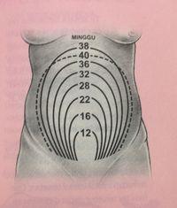 Hitung Usia Kehamilan Berdasarkan Tinggi Rahim