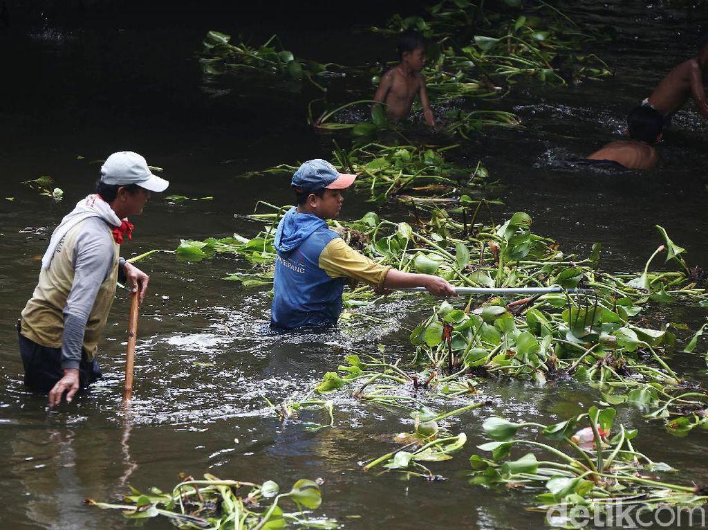 Bersihkan Eceng Gondok, Pasukan Biru Nyemplung ke Sungai