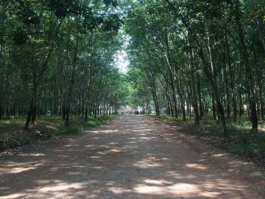 Hilangkan Penat di Hutan Karet Teduh yang Instagrammable