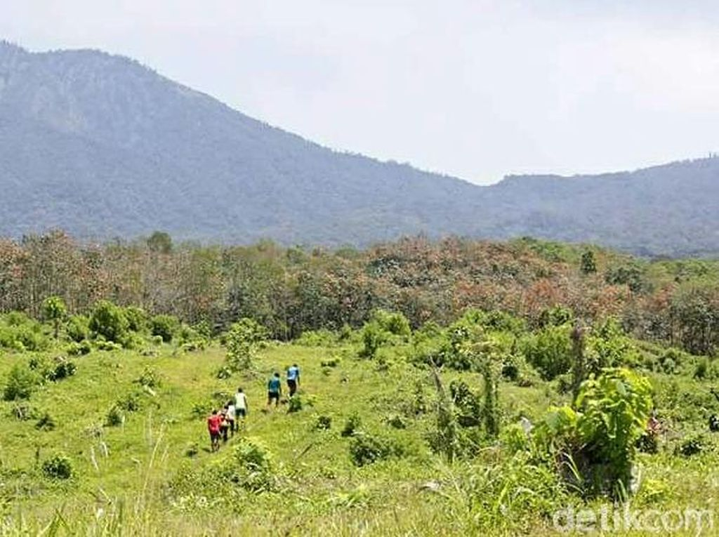 Foto: Indahnya Jalur Lomba Lari di Banyuwangi