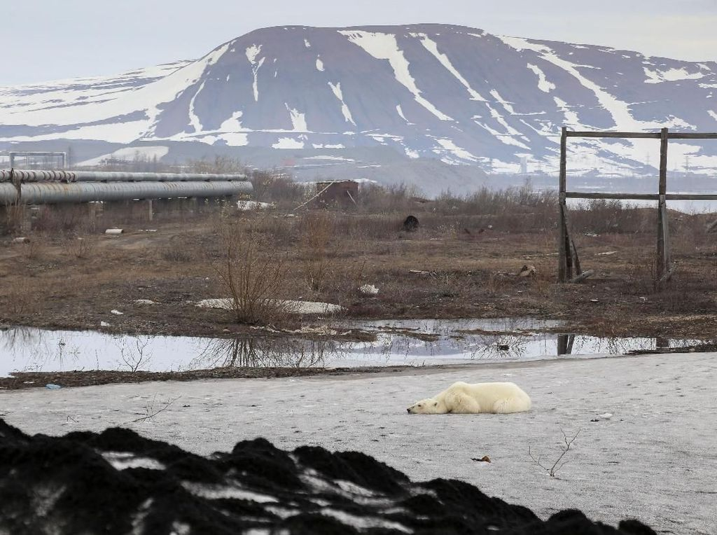 Fenomena Panas Panjang di Siberia, Terjadi 80.000 Tahun Sekali
