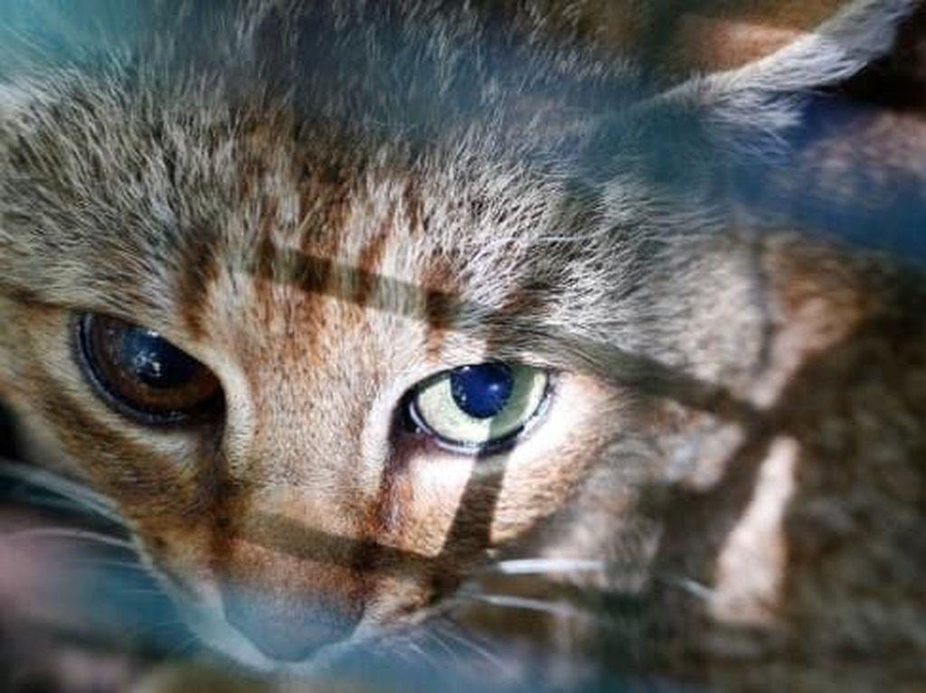 Pria yang Makan Kucing Hidup Dikenal dengan Sebutan Abah Grandong